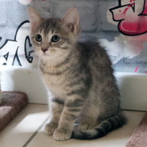 PRUDENCE – non disponible