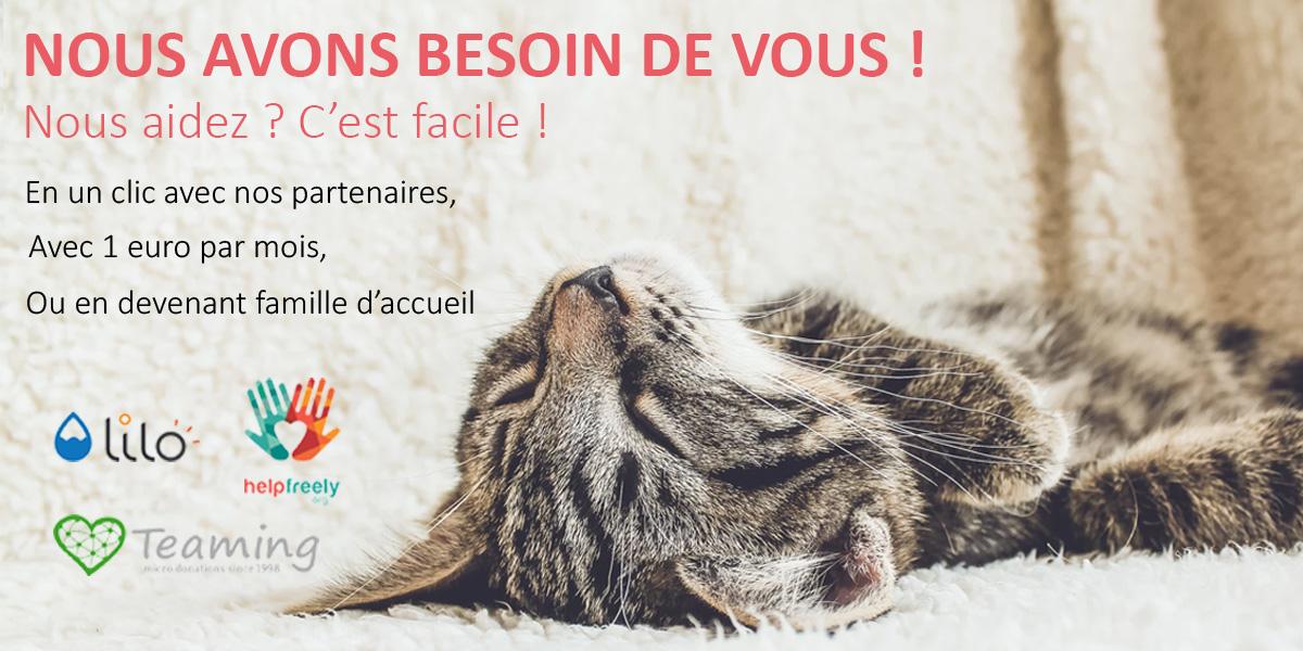 Association L Etoile Feline Adoption Chat Et Chaton En Ile De France